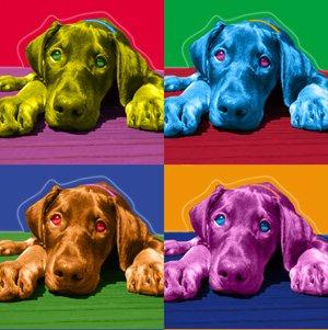 Andy Warhol Dog Art