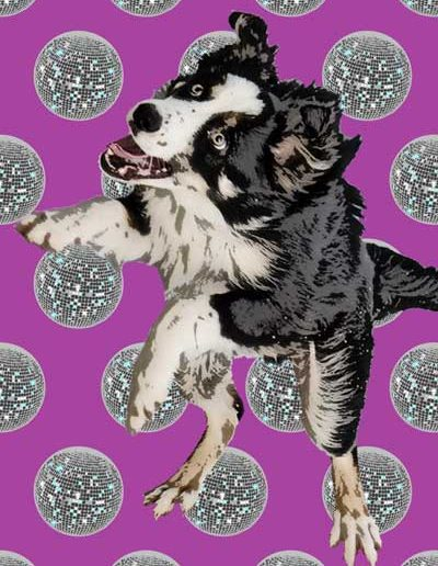 Collie-pop-art