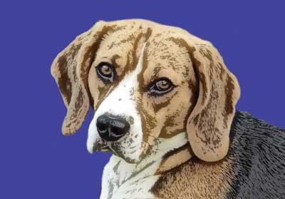 beagle-pop-art