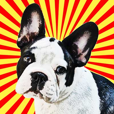 frenchbulldog3-pop-art