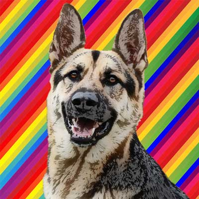 germanshepherd-pop-art