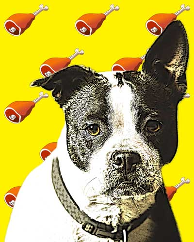 staffy-pop-art