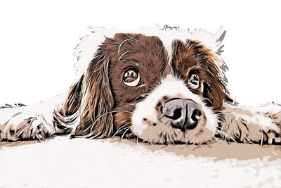 pet-portraits-6